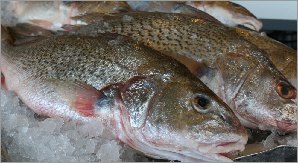 Croakers fresh fish house for Croaker fish recipe
