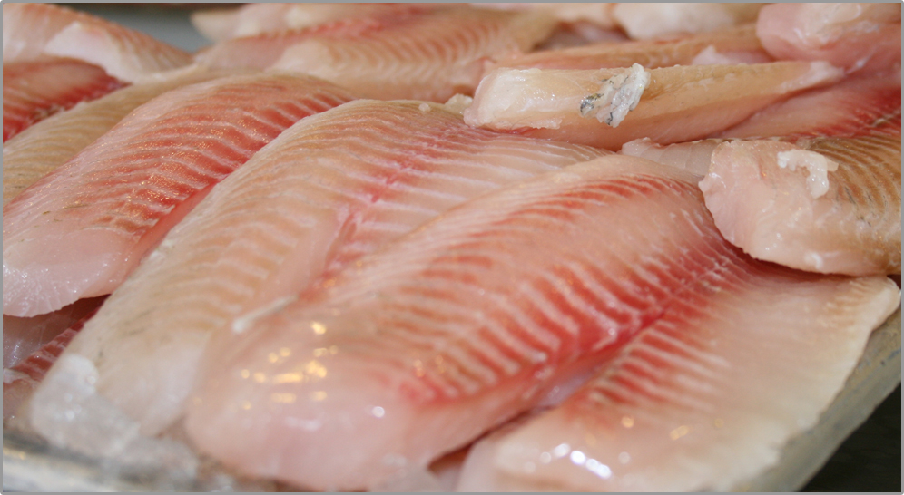 Tilapia fresh fish house for Is tilapia fish good for you