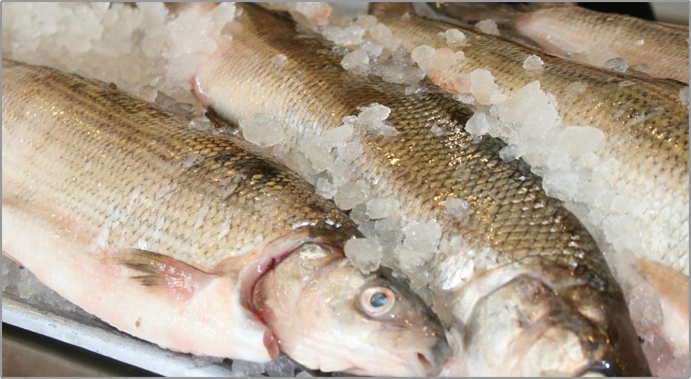 Whitefish Freshfishhouse Com Fresh Fish House